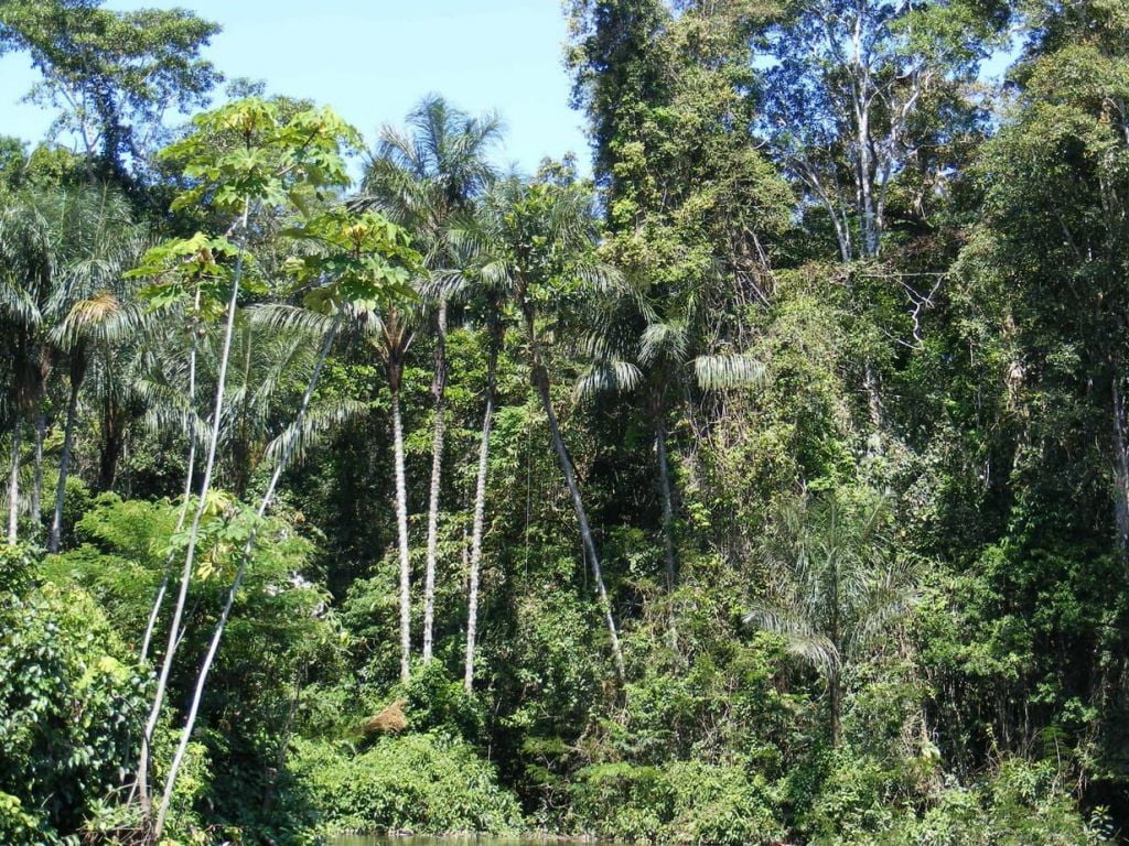 Using SAR for forestation analysis